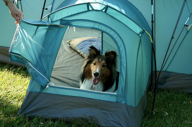 Tips for Camping with a Dog